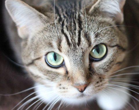 Quer adotar um pet? Dá uma olhada no que você precisa saber antes de adotar um animalzinho.