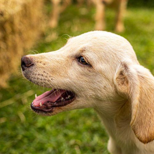 Cuidados redobrados com os nossos pets durante o Coronavírus